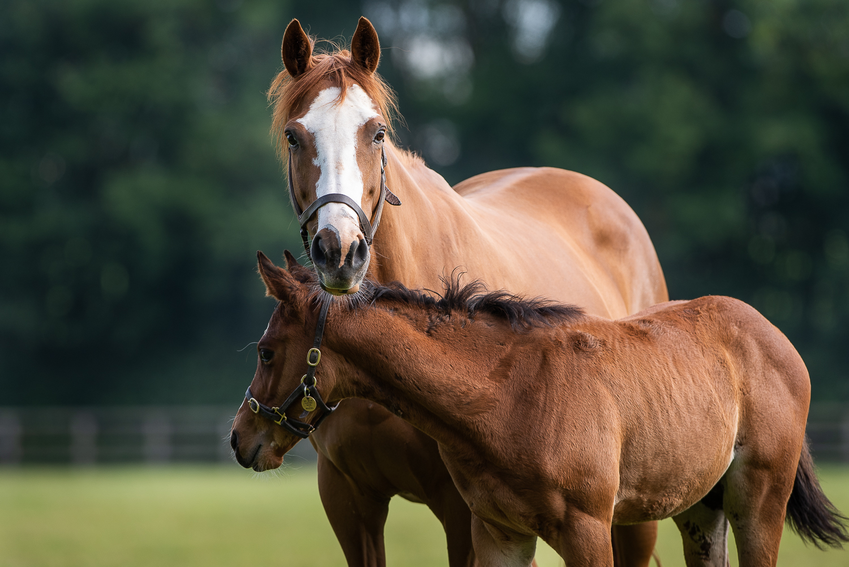 Shalwa & Foal 2